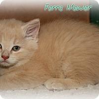 Adopt A Pet :: Ferris Mewler - Shippenville, PA