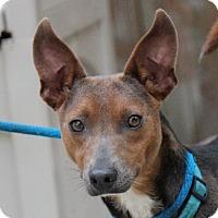 Adopt A Pet :: Chico Jones - Locust Fork, AL