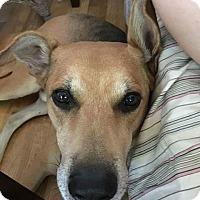 Adopt A Pet :: River - Henderson, NV