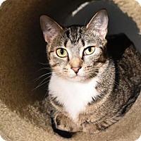 Adopt A Pet :: Nicola - Cary, NC