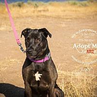 Adopt A Pet :: Lucy - Gardnerville, NV