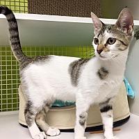 Adopt A Pet :: Tamsin - Los Angeles, CA