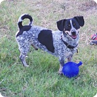 Adopt A Pet :: Chesterfield - Justin, TX