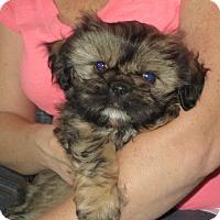 Adopt A Pet :: Ralph - Salem, NH