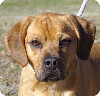 Hound (Unknown Type) Mix Dog for adoption in Daytona Beach, Florida - Squiggy