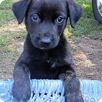 Adopt A Pet :: *Espresso - PENDING - Westport, CT