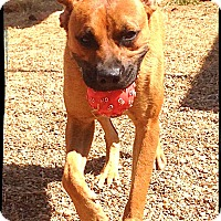 Adopt A Pet :: Inga - Austin, TX