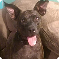 Adopt A Pet :: Echo - Cheney, KS
