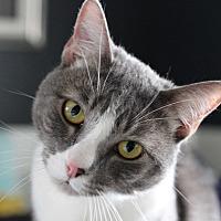 Adopt A Pet :: Jax - Bellflower, CA