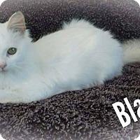 Adopt A Pet :: Blanca - McDonough, GA