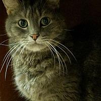 Adopt A Pet :: Perrone - Trevose, PA