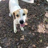 "Adopt A Pet :: Daisy ""Mae"" - Macon, GA"