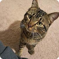 Adopt A Pet :: Roman - Troy, MI