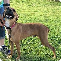 Adopt A Pet :: Chet - Park Falls, WI