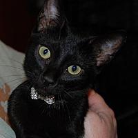 Adopt A Pet :: Deysha - Morgan Hill, CA