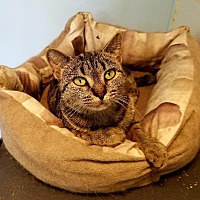 Adopt A Pet :: CeCe - Port Clinton, OH