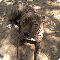 Adopt A Pet :: Barney.Handsome Handsom - Sacramento, CA