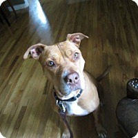 Adopt A Pet :: Missy - NEEDS FOSTER! - Los Angeles, CA