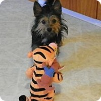 Adopt A Pet :: Holly - North Benton, OH