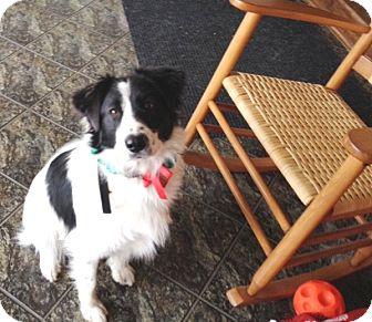Border Collie Mix Dog for adoption in Lucknow, Ontario - Logan- Adoption Pending