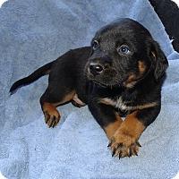 Adopt A Pet :: *Jackpot - PENDING - Westport, CT