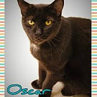 Adopt A Pet :: Oscar - Island Heights, NJ