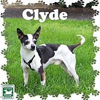Chihuahua Mix Dog for adoption in Fallston, Maryland - Clyde
