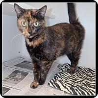 Adopt A Pet :: Wendy - Newport, NC