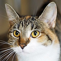 Adopt A Pet :: Gumby - Danville, KY