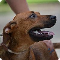 Adopt A Pet :: Veronica - Daleville, AL