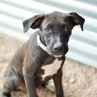 Adopt A Pet :: 914-16 - Brighton, CO