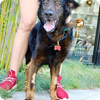 Adopt A Pet :: Seamus - Los Angeles, CA