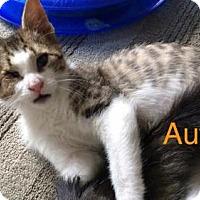 Adopt A Pet :: Autumn - Hamilton, ON