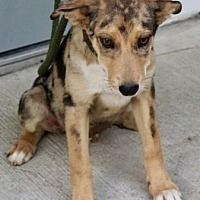 Adopt A Pet :: Dean - Spring Valley, NY