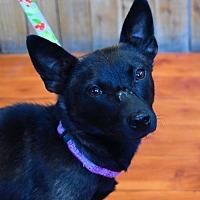 Adopt A Pet :: Shyla - Prosser, WA