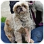 Photo 2 - Shih Tzu Dog for adoption in Jacksonville, Florida - Oscar