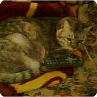 Adopt A Pet :: Marbles - Jenkintown, PA