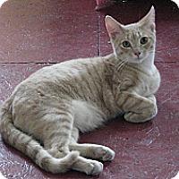 Adopt A Pet :: Olaf - Portland, ME