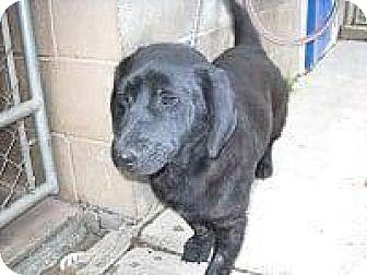 Basset Hound Mix Dog for adoption in Rexford, New York - Fred