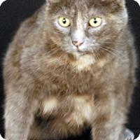 Adopt A Pet :: Rachel - Newland, NC