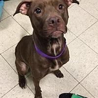 Adopt A Pet :: Roxanne - Fulton, MO