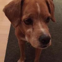 Adopt A Pet :: Martha Moose - Phoenix, AZ