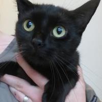 Adopt A Pet :: Rachel - Menomonie, WI