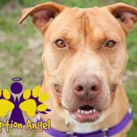 Mixed Breed (Large) Mix Dog for adoption in Georgetown, Texas - Sport