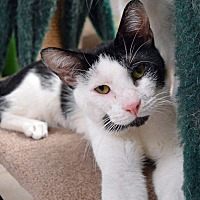 Adopt A Pet :: Bon Jovi - Middletown, NY
