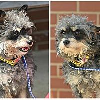 Adopt A Pet :: Ricky - Siler City, NC