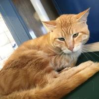 Adopt A Pet :: Peanut - Penn Yan, NY