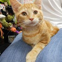 Adopt A Pet :: Alex - Reston, VA