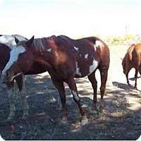 Adopt A Pet :: Pearl - Pueblo, CO