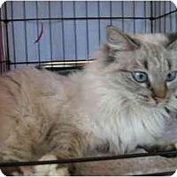 Adopt A Pet :: Anastasia - Easley, SC